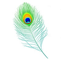 Peacock feathers coloring pages