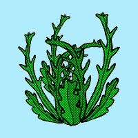 Seaweed coloring pages