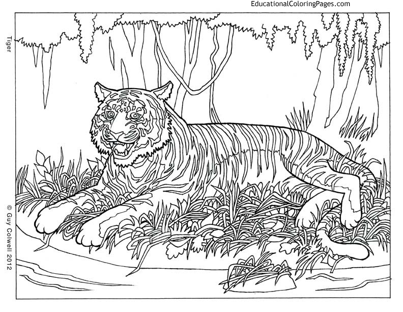 pattern animal coloring pages - Color Animal Pictures