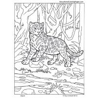 Jaguar coloring pages