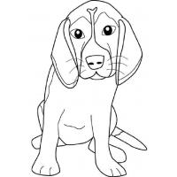 Beagle coloring pages