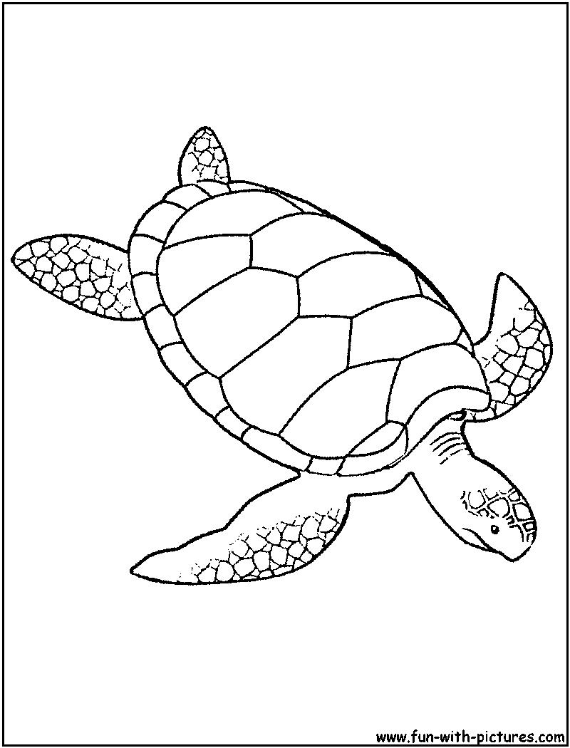 Sea turtle drawings for kids