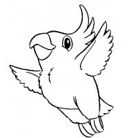 Parrots coloring pages