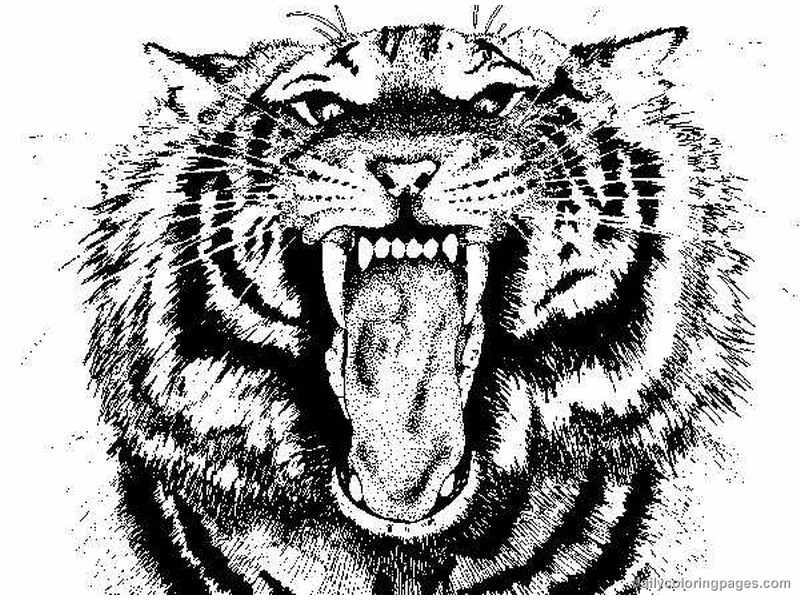 tiger coloring pages - Coloring Pages Of Tigers