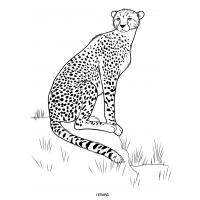 Wild animals coloring pages