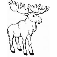Moose coloring pages