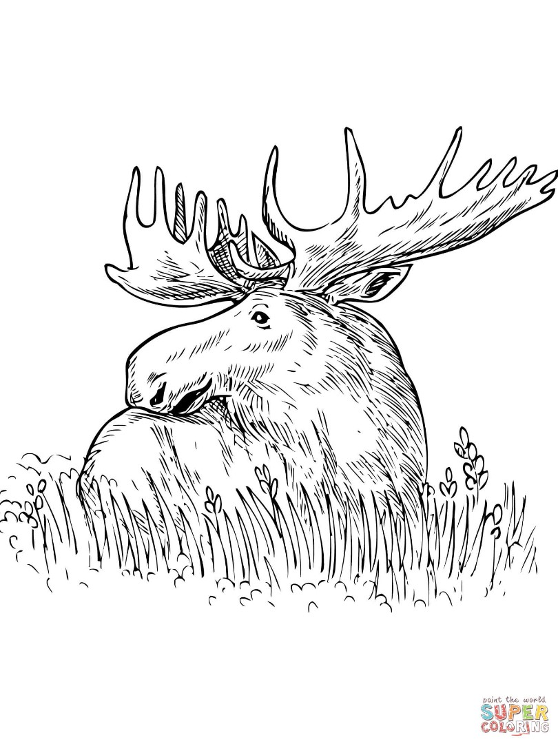 Luxury Brother Bear Moose Coloring Pages Frieze - Coloring Pages Of ...
