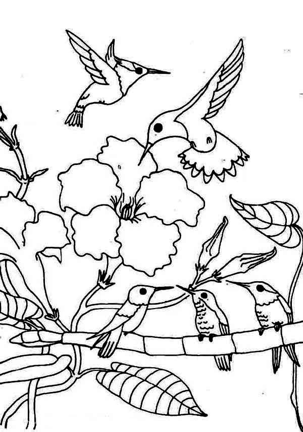 coloring pages of humming bird   Hummingbird coloring pages to download and print for free