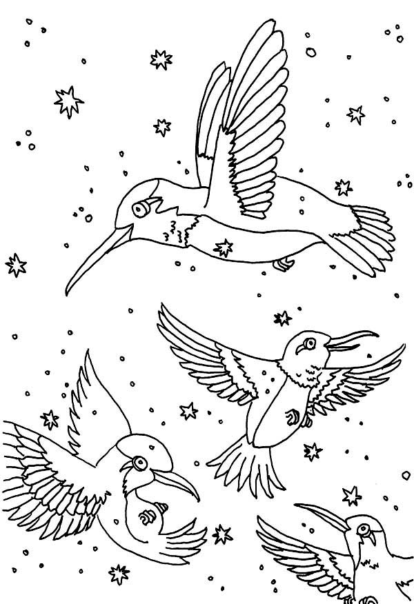 hummingbird coloring pages to download and print for free hummingbird art hummingbird coloring pages