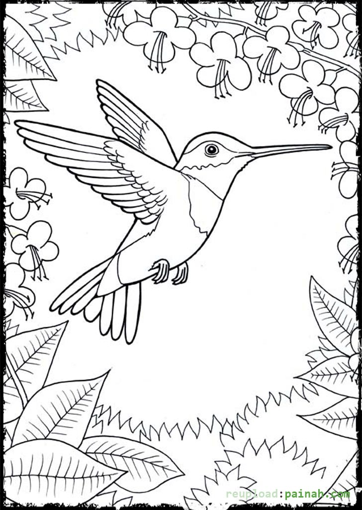 Beautiful Hummingbird Coloring Pages