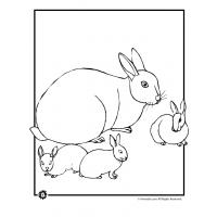 Baby bunnies coloring pages