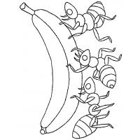 Ants marching coloring pages