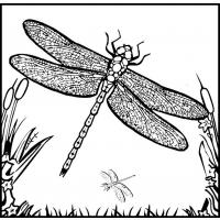 Dragonflies coloring pages