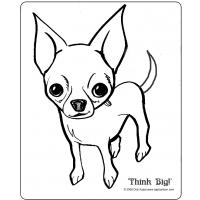 Chihuahua dog coloring pages