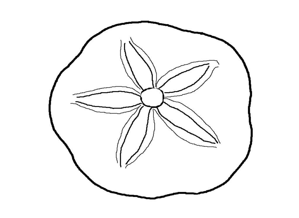 sea shell coloring sheet