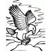 Bald eagle coloring pages