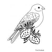 Winter bird coloring pages