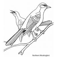 Yellow finch coloring pages