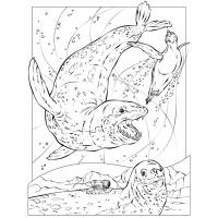 Leopard seal coloring pages