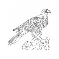Hawk coloring pages