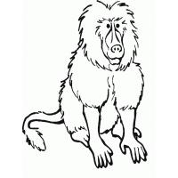 Baboon coloring pages