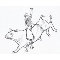 Bull coloring pages
