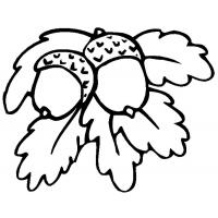 Acorn coloring pages