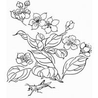 Cherry coloring pages