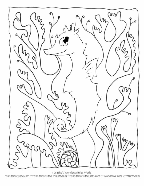 Seaweed coloring pages to download