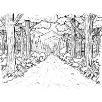 Forest coloring pages