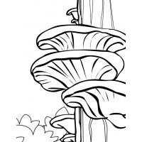 Mushroom coloring pages