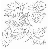 Flower leaves coloring pages