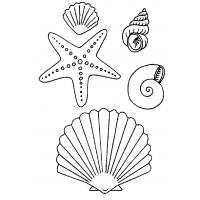 Seashell coloring pages