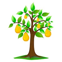 Pear tree coloring pages