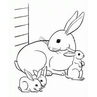 Cute bunny coloring pages
