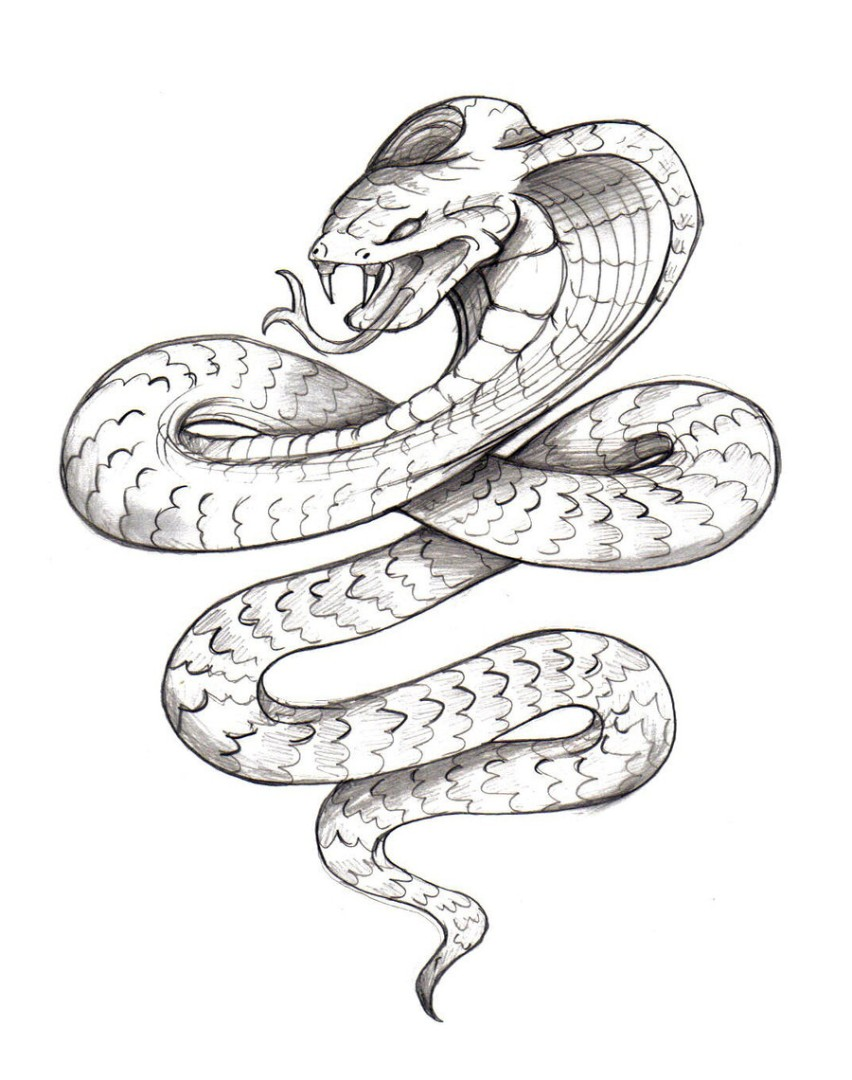 cobra snake coloring pages - photo#10