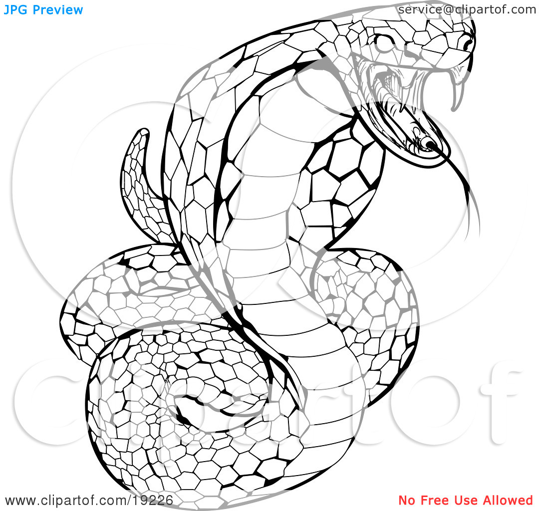 cobra snake coloring pages - photo#11