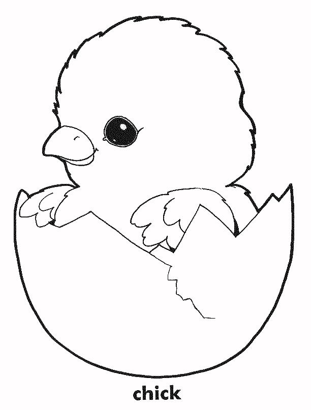 Chicken coloring pages to download and print for free