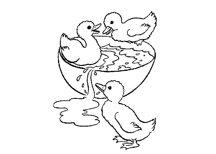 Ducks Coloring Pages To Download And Print For Free