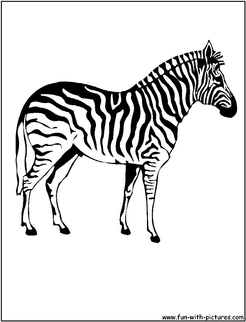 Zebra coloring pages to download and print for free