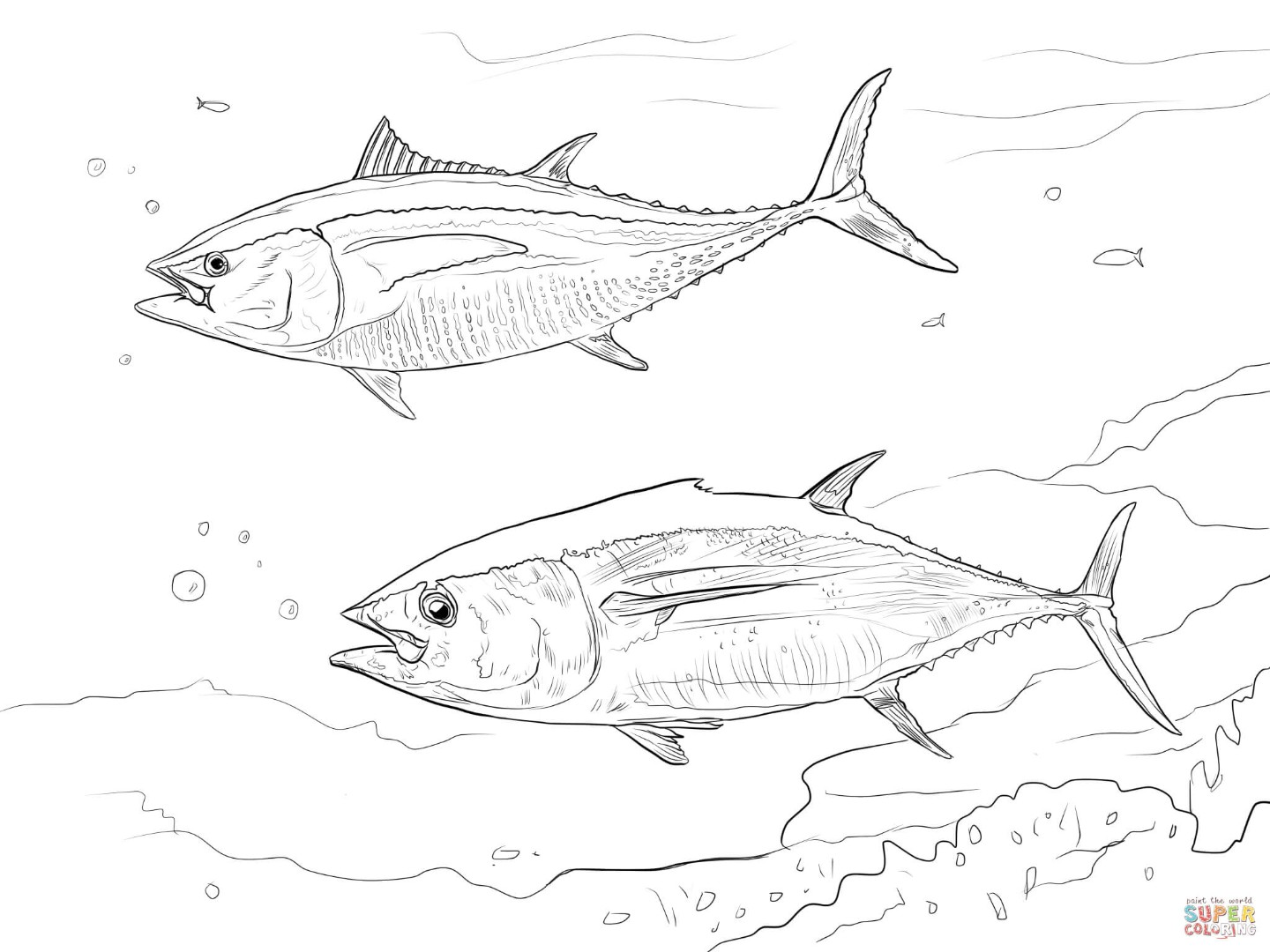 Pacific salmon coloring pages download and print for free
