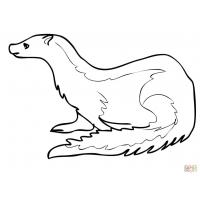 Ermine coloring pages
